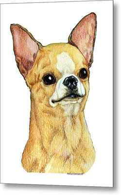 Chihuahua, Smooth Coat Metal Print