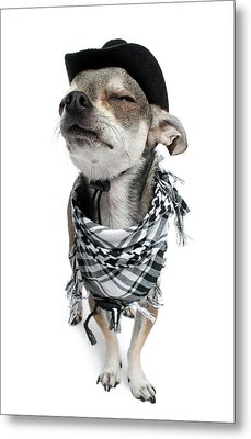 Chihuahua Wearing A Scarf And A Cowboy Hat Metal Print by Life On White