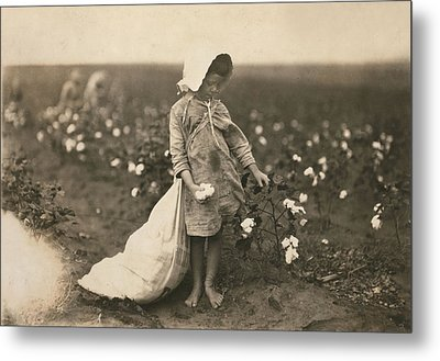 Child Labor, A Young Girl Picking Metal Print by Everett