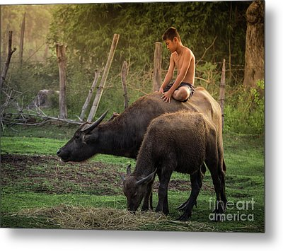 Child Riding Buffalo In Countryside Thailand. Metal Print by Tosporn Preede