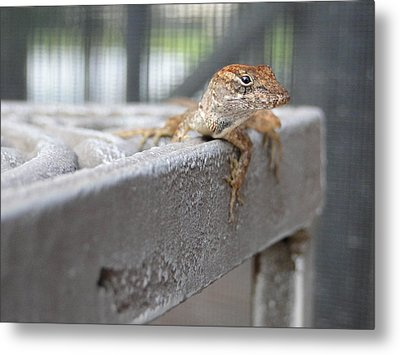 Chillin' Metal Print by Gail Butters Cohen