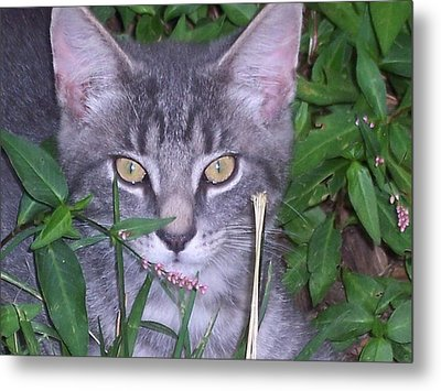 Chilling In The Garden Metal Print by Martha Hoskins