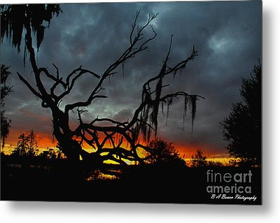 Chilling Sunset Metal Print by Barbara Bowen