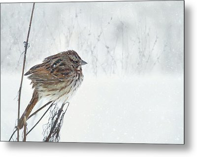 Metal Print featuring the mixed media Chilly Song Sparrow by Lori Deiter