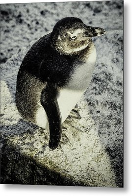 Chillypenguin Metal Print