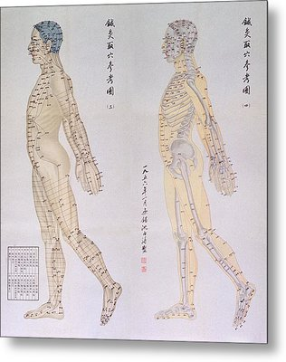 Chinese Chart Of Acupuncture Points Metal Print