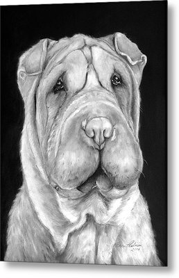 Chinese Sharpei Metal Print