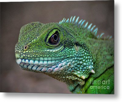 Metal Print featuring the photograph Chinese Water Dragon by Savannah Gibbs