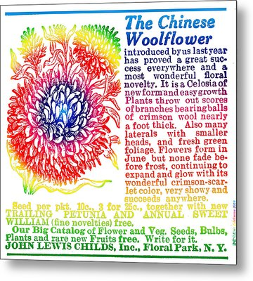 Chinese Woolflower Metal Print