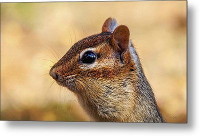 Metal Print featuring the photograph Chipmunk by Bob Orsillo