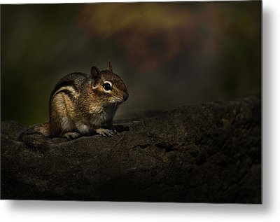 Metal Print featuring the photograph Chipmunk On Rock by Michael Cummings