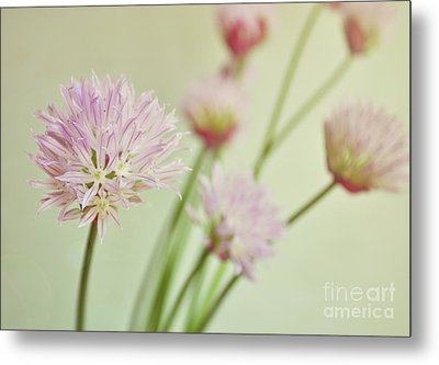 Chives In Flower Metal Print by Lyn Randle