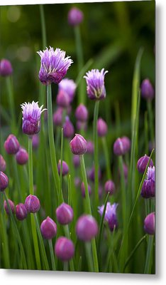 Metal Print featuring the photograph Chives by Patrick Downey