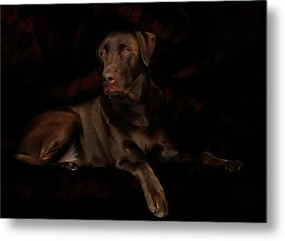 Chocolate Lab Dog Metal Print by Christine Till
