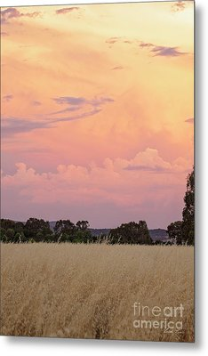Metal Print featuring the photograph Christmas Eve In Australia by Linda Lees
