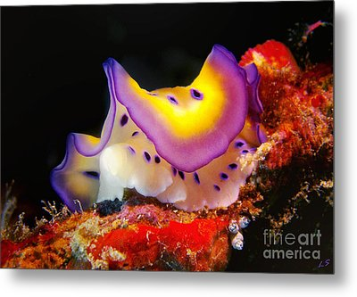 Chromodoris Kunei Nudibranch  Metal Print