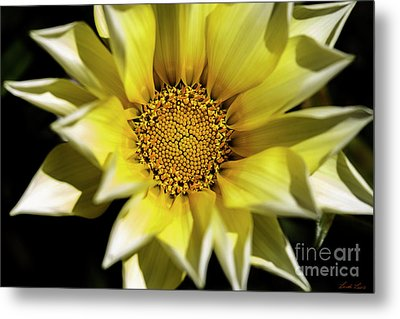 Metal Print featuring the photograph Chrysanthos by Linda Lees