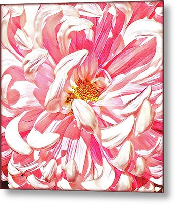 Chrysanthemum In Pink Metal Print by Shadia Derbyshire