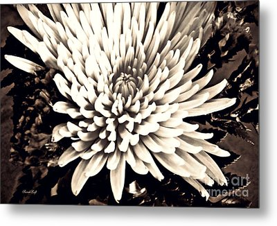 Metal Print featuring the photograph Chrysanthemum In Sepia 2  by Sarah Loft