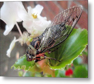 Metal Print featuring the photograph Cicada On Flower by Beth Akerman