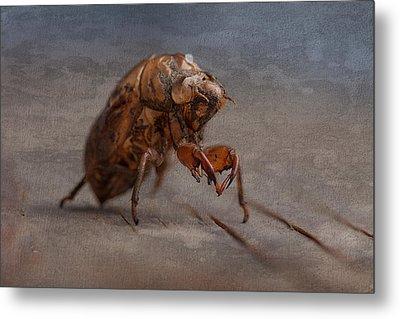 Cicada Shell Metal Print by Tom Mc Nemar
