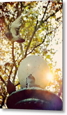 City Doves Metal Print by JAMART Photography
