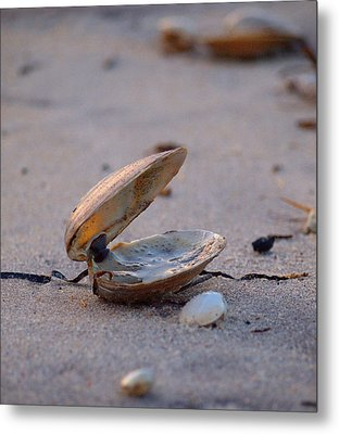 Clam I Metal Print by  Newwwman