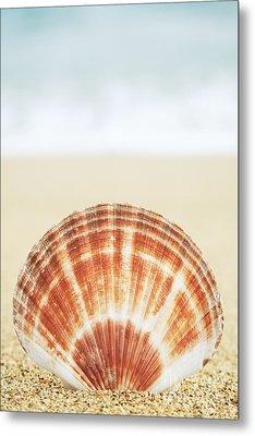 Clam Shell Metal Print by Brandon Tabiolo - Printscapes