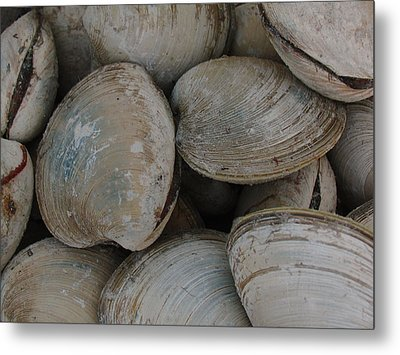 Clam Shells Metal Print