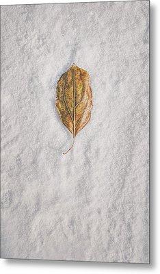 Clash Of Seasons Metal Print by Scott Norris