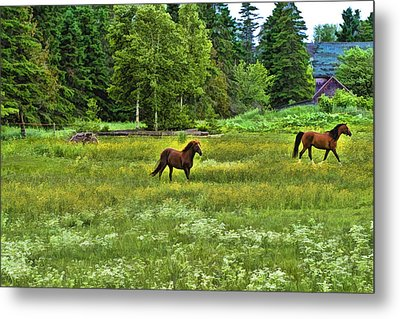Metal Print featuring the photograph Classic Country by Gary Smith