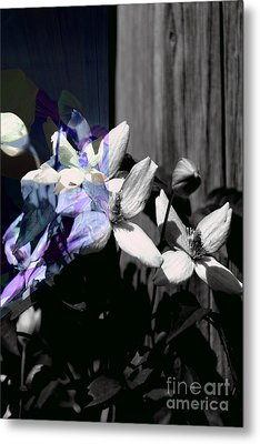 Clematis 2 Shades Of Grey Metal Print