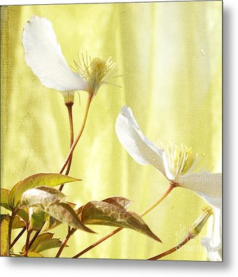 Clematis And Sunshine Metal Print