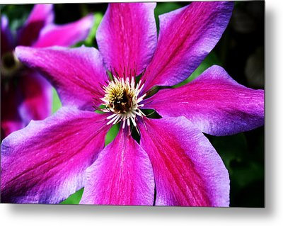 Clematis Flower Metal Print by Cathie Tyler