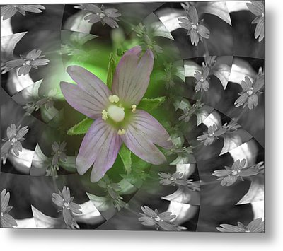 Metal Print featuring the photograph Clematis by Keith Elliott