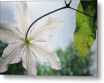 Clematis Vine And Leaves Metal Print by Michelle Calkins