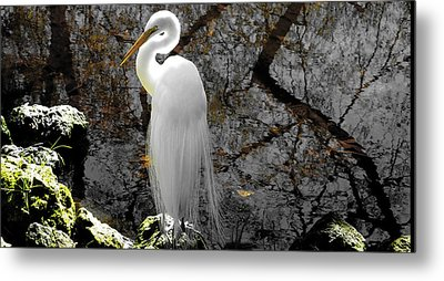 Cloaked Metal Print by Judy Wanamaker