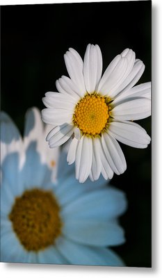 Close Up Daisy Metal Print by Nathan Wright