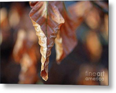 Close-up Of Autumn Leaf Metal Print