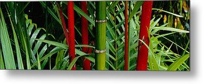 Close-up Of Bamboo Trees, Hawaii, Usa Metal Print