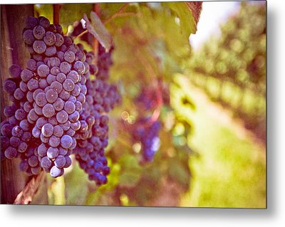 Close Up Of Grapes Metal Print by Boston Thek Imagery