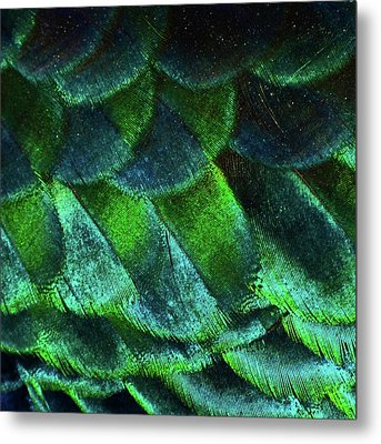 Close Up Of Peacock Feathers Metal Print