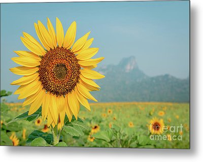 Metal Print featuring the photograph Close-up On Sunflower. by Tosporn Preede