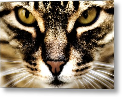 Close Up Shot Of A Cat Metal Print