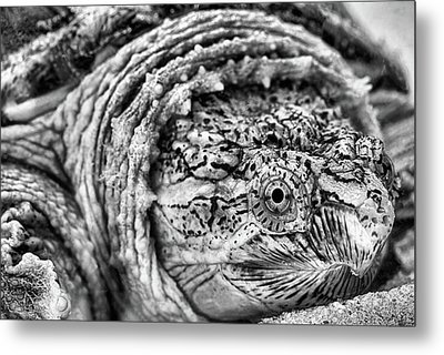Metal Print featuring the photograph Closeup Of A Snapping Turtle by JC Findley