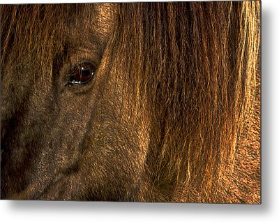 Closeup Of An Icelandic Horse #2 Metal Print by Stuart Litoff