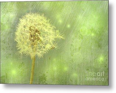 Closeup Of Dandelion With Seeds Metal Print by Sandra Cunningham