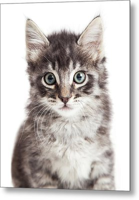 Closeup Portrait Black Tabby Kitten Metal Print