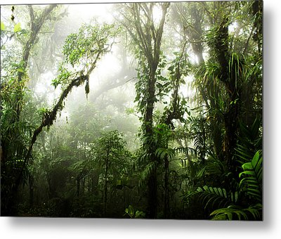Cloud Forest Metal Print by Nicklas Gustafsson