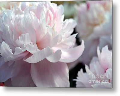 Cloud Of Peonies-47 Metal Print by Eva Thomas